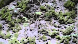 Escarabajos en el Bosque la Primavera