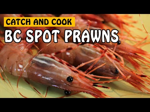 CATCH AND COOK SPOT PRAWN IN VANCOUVER BC! | Fishing With Rod