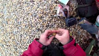 How to rig and hook a Peeler Crab