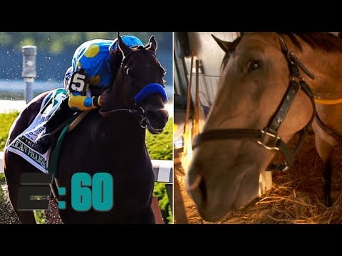 Meet American Pharoah's best friend Smokey | E:60