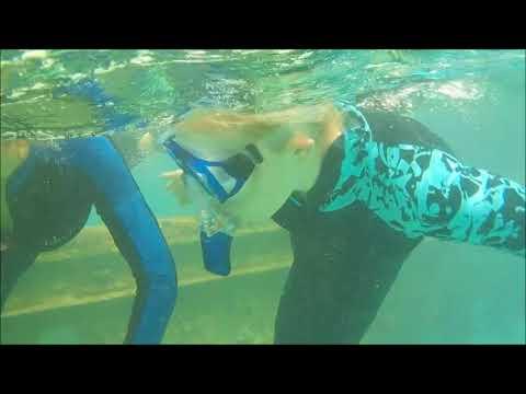 VTVLC Marine Biology Bermuda  2016