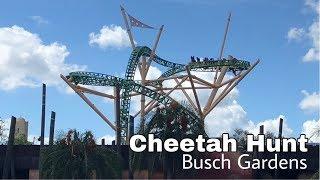 Cheetah Hunt - Busch Gardens