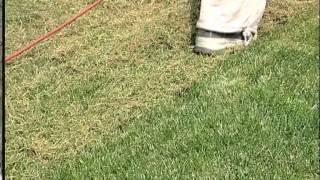 Vertikutace a obnova trávníku