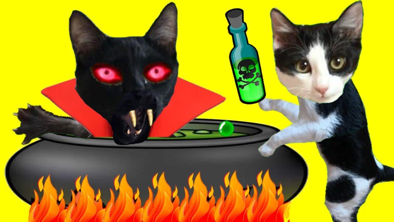Gatos Luna y Estrella haciendo la bebida en casa para el gato vampiro / Videos de gatitos graciosos