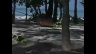 تسونامي وزلزال ضخم يضرب اندونيسيا و هزات في الهند 11/4/2012