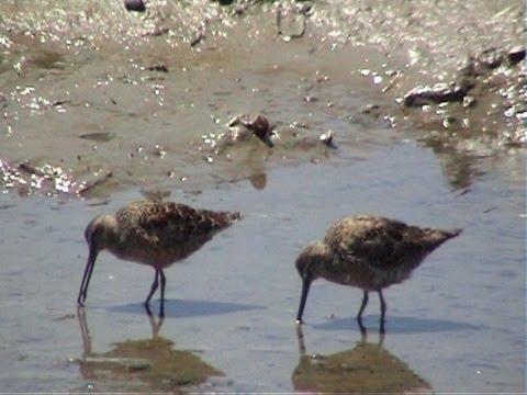 Birds Upper Newport Bay, California