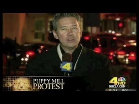 barkworks puppy mill protest at cerritos mall 122014 doovi