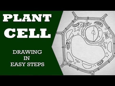 How To Draw Diagram Of Plant Cell Step By Step For Beginners Youtube