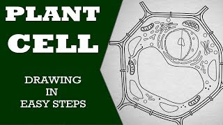 How to draw plant cell in easy steps :fundamental unit of life : ncert class 9 biology :CBSE Science