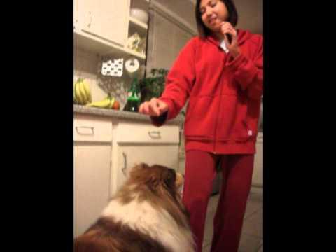 Dog hump + Cha Cha + Justin Bieber - Baby Cover