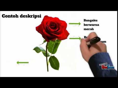 Konita Contoh Deskripsi Mawar Youtube