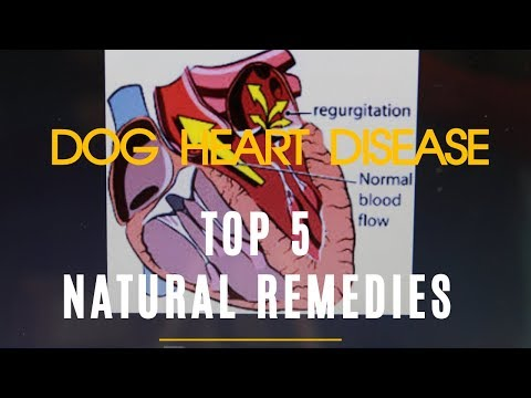 Dog Heart Disease: Top 5 Natural Remedies