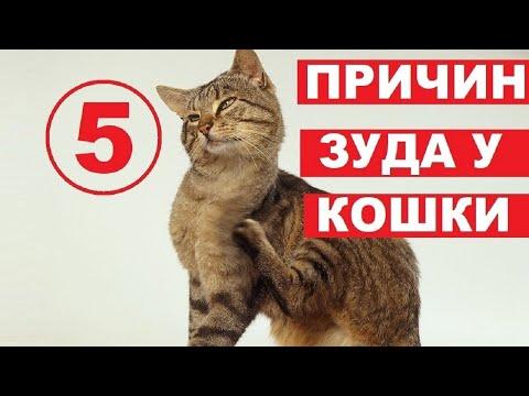 Почему кошка чешется   5 причин