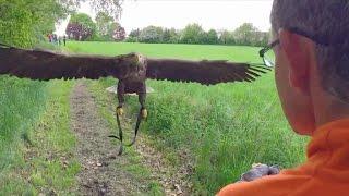 Video eines ungewöhnlichen Fluges: Köln aus der Adler-Perspektive