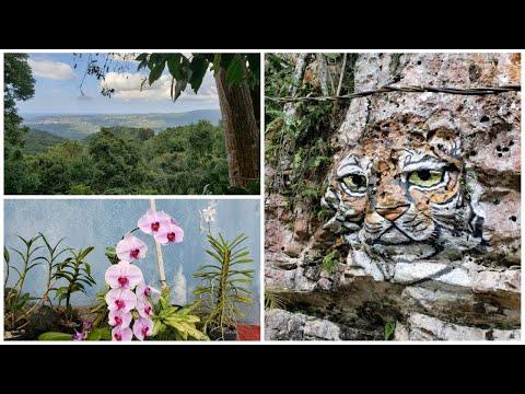 Jamaican Flowers & Jamaican Art  | @Ahhh Ras Natango | Unique Activities In Montego Bay Jamaica