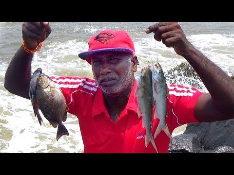 Fishing For Inshore RABBITFISH & CATFISH