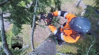 Large spruce takedown - Stihl ms 500i 24¨ bar.