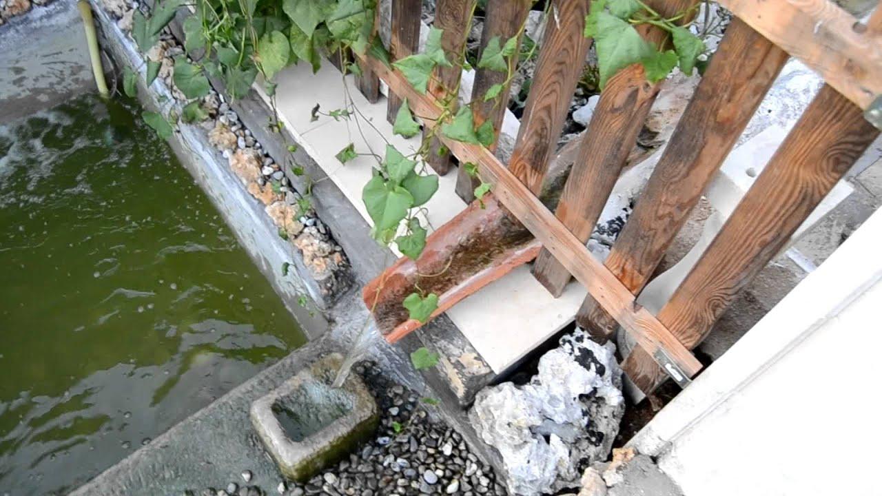 Cambio d 39 acqua laghetto tartarughe trachemys youtube for Laghetto tartarughe inverno