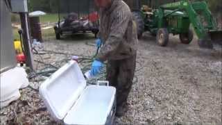 How to Field Dress Wild Pigs: Quick Tailgate Method