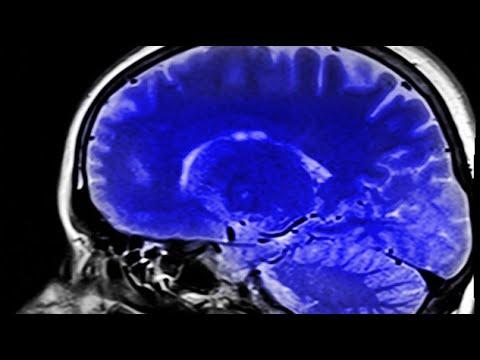 Understanding The Brain: Unlocking Human Potential