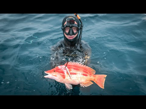 Spearfishing Australian Record - Eastern Pigfish
