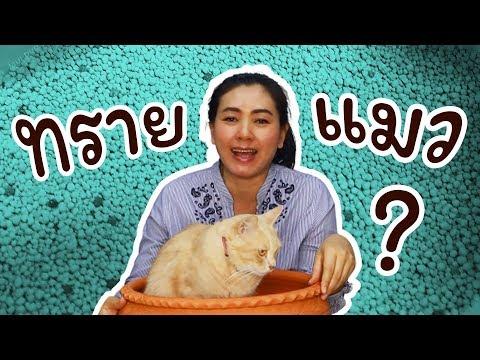 มือใหม่หัดเลี้ยงแมวต้องดูเลยจ้า การใช้ทรายแมว การใช้กระบะทราย วิธีตักขรี้แมว | JimTV
