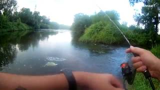 Де Ці Риби? Я Питаю! | Річка Чорна | Бак Terliczka | Спінінг за Kleniem (eng subs)