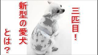 AKB48 高城亜樹 大の愛犬家であきちゃがラジオでフーちゃん、マーちゃん...