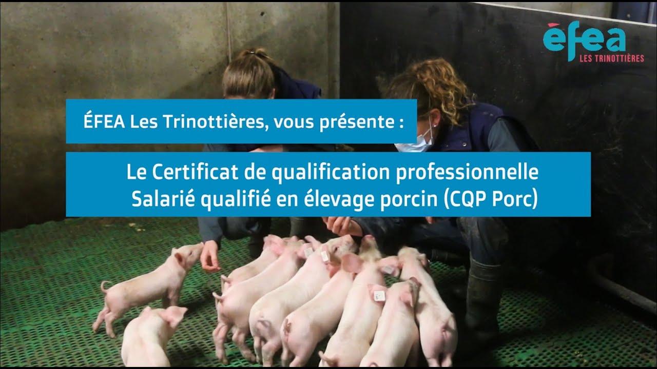 Download [Formation] Devenez salarié qualifié en élevage porcin.