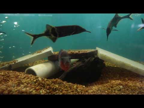 Tropical Fish Jungle Aquatics