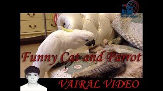 #Funny Cat and Parrot #VAIRAL VIDEO