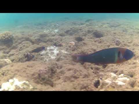 Kaua'i Snorkeling - Ke'e Beach