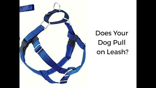 How To Fit A No Pull Freedom Harness
