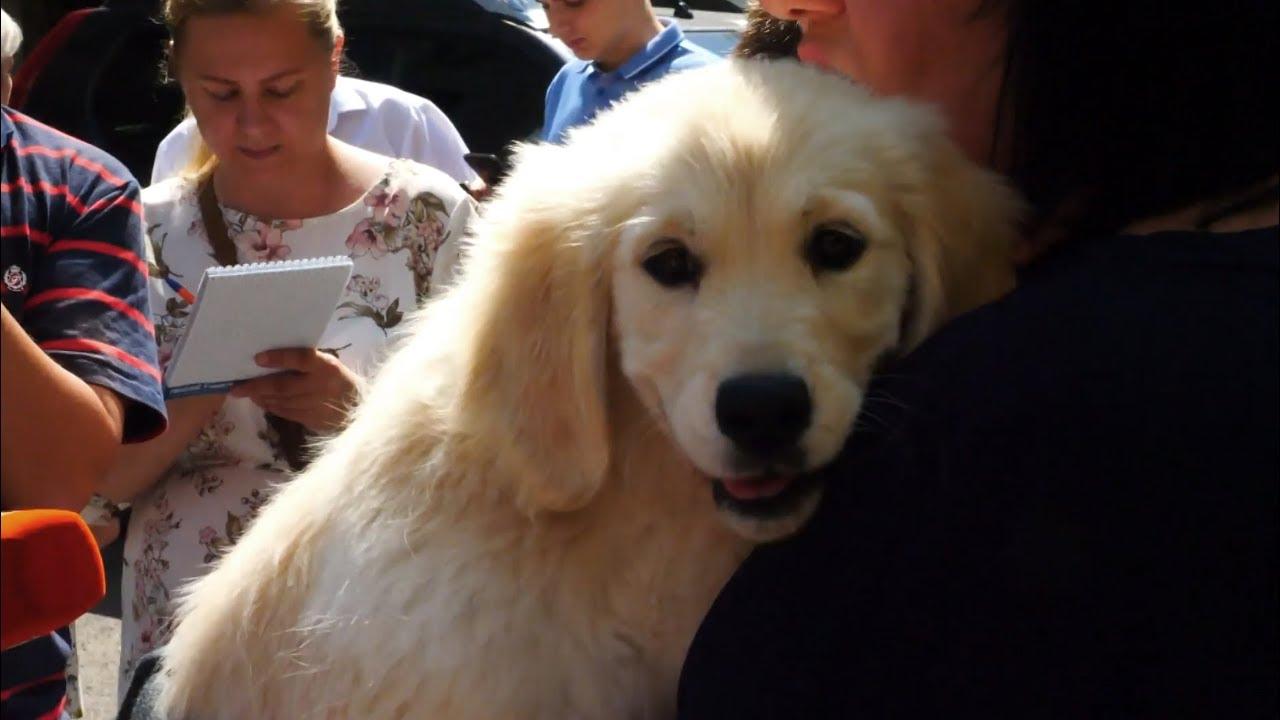 Владимир Путин подарил щенка ретривера мальчику с аутизмом