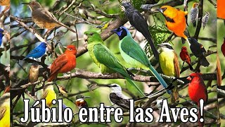 Los Cantos Más Extraordinarios de Aves. Te van a encantar woww 🥳🥰