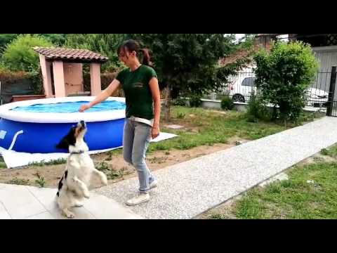 With you you tube amateur dog