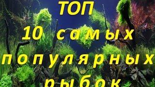 Самые популярные и неприхотливые аквариумные рыбки для начинающих