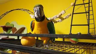 Попугай ара и грейпфрут