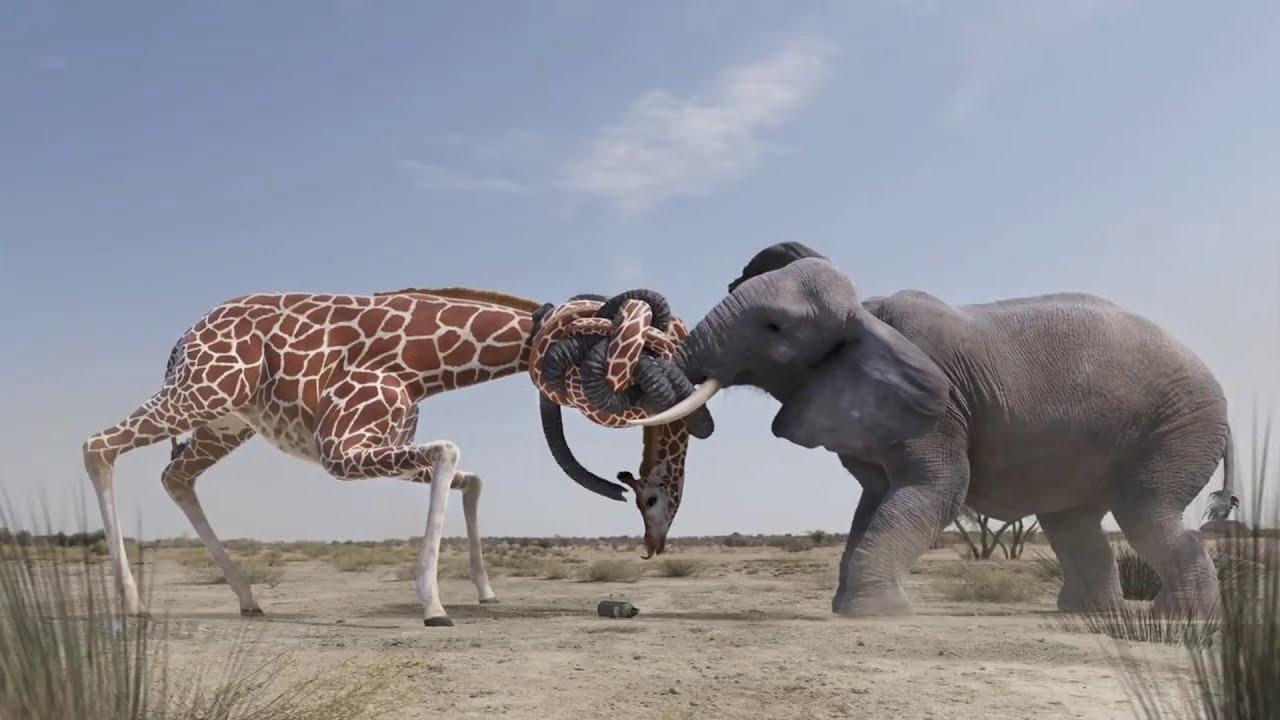 প্রাণীদের এমন লড়াই - যা দেখার জন্যও কপাল লাগে  || ৭ টি প্রাণী যারা হাতিকে সহজেই মারতে পারে #Animals