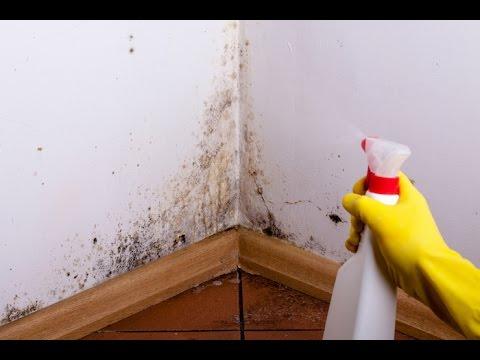 Astuce Miracle   Comment Enlever LHumidit Dans La Maison