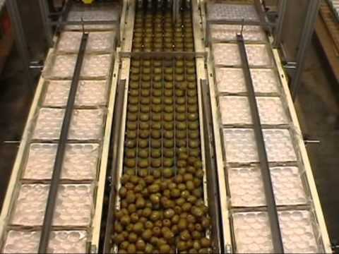Stroba - Kiwifruit, Lemons Automatic Tray Packing Production Run