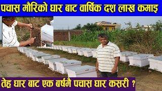 पचास मौरिको घार बाट वार्षिक दश लाख कमाइ || तेह्र् घार बाट एक बर्षमै पचास घार कसरी ? || News Nepal