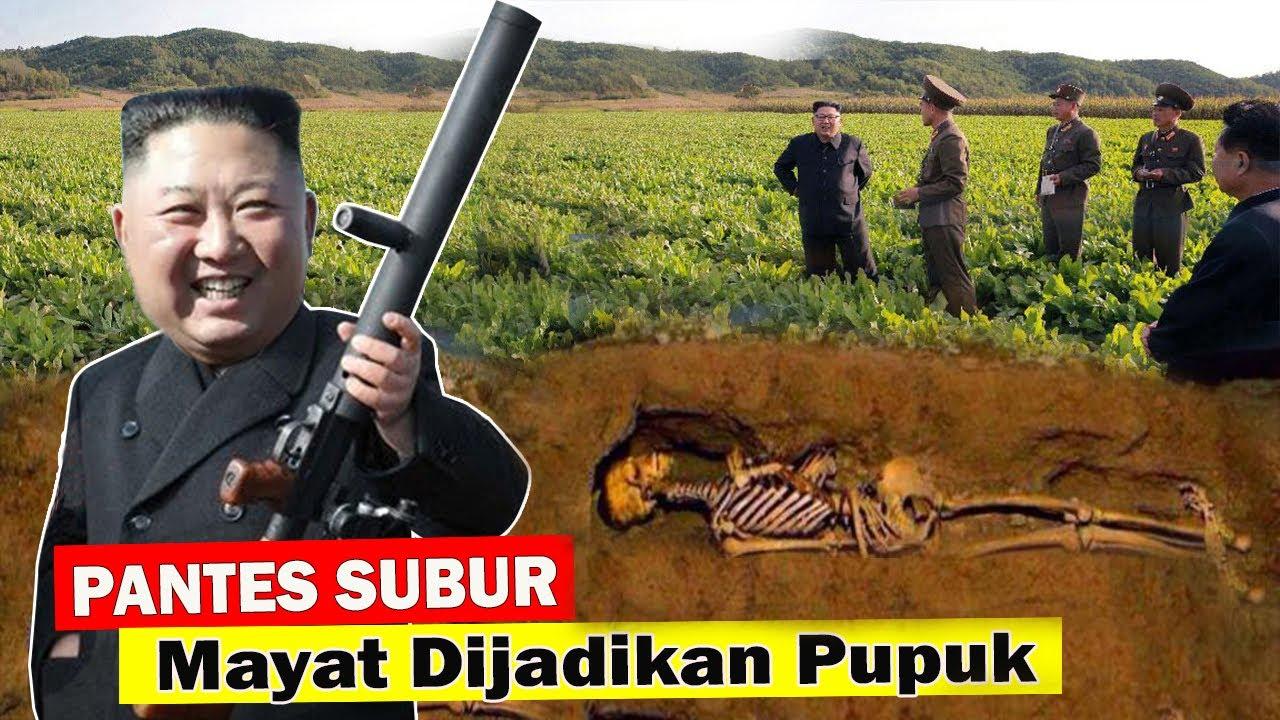 EDYAAAAN!! Pantes SUBUR BANGET,  Kim Jong Un Bikin Pupuk Dari Mayat Manusia