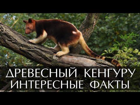 Вопрос: Сколько хромосом у кенгуру?