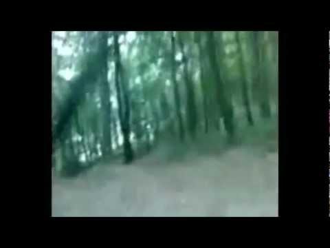 Raptorex Downhill