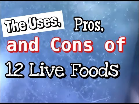 Live Fish Food: The Uses, Pros And Cons