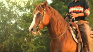 The Country Boys - ความรู้เกี่ยวกับม้า ตอนที่ 3
