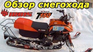снегоход Irbis Dingo T150, обзор и тест-драйв в глубоком снегу. Ирбис Динго