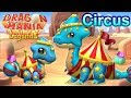 🎪 NEW CIRCUS DRAGON! 🎪 Baby + Adult Form Images! DML #558