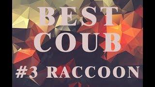 Best Coub #3 Raccoon